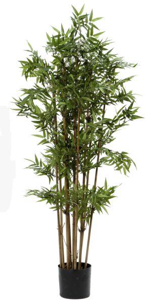 Fieb Bambus I Topf 140cm Peter Susse
