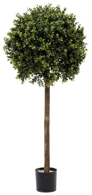 fieb buchs kugelbaum im topf 100 cm gr n peter s e. Black Bedroom Furniture Sets. Home Design Ideas