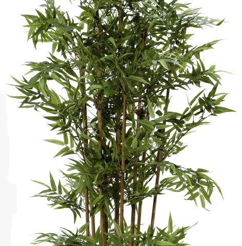 Fieb Bambus I Topf 115cm Peter Susse