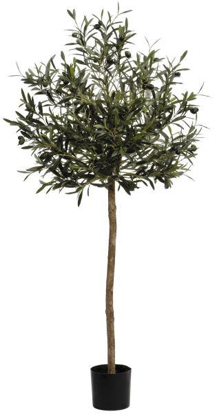 oliven kugelbaum getopft 130cm peter s e. Black Bedroom Furniture Sets. Home Design Ideas