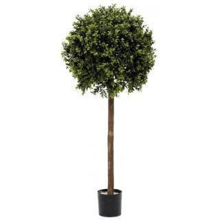 Fiebiger Buchs-Kugelbaum im Topf 100 cm grün
