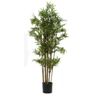 Fiebiger Bambus im Topf 140cm