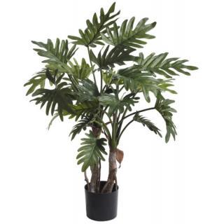 Fiebiger Philodendron Selloum im Topf 76cm