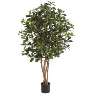 Fiebiger Philodendron Selloum im Topf 120cm