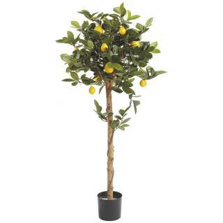 Fiebiger Zitronenbaum