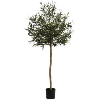 Oliven-Kugelbaum getopft 130cm