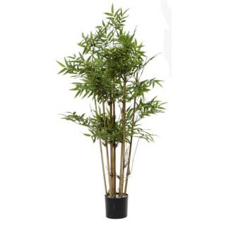 Fiebiger Bambus im Topf 115cm
