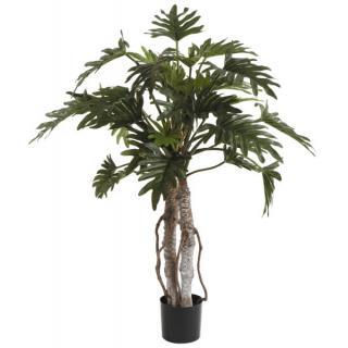 Fiebiger Philodendron Selloum im Topf 108cm